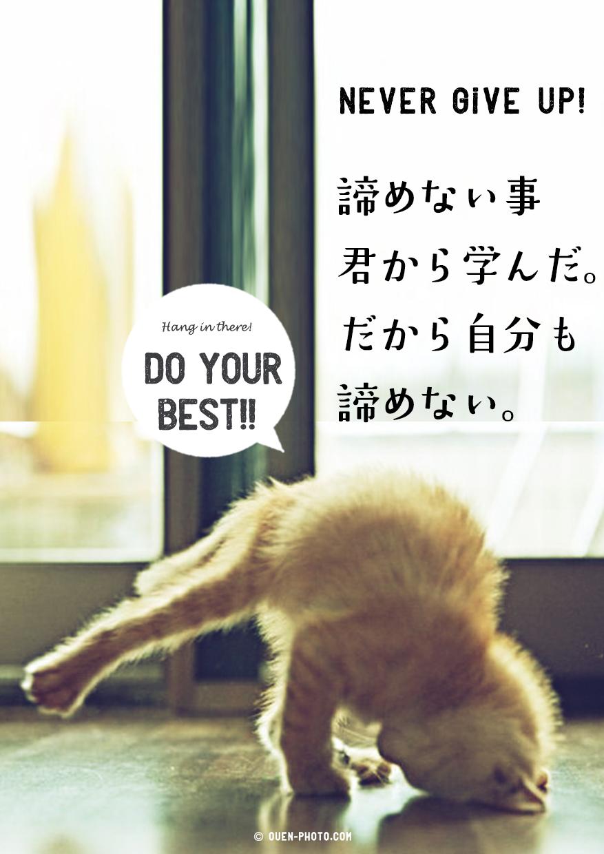 関連サイト:元気の出る応援画像